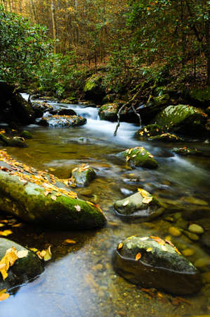 great smoky national park: Slow moving creek in the fall in the Smoky Mountains Stock Photo