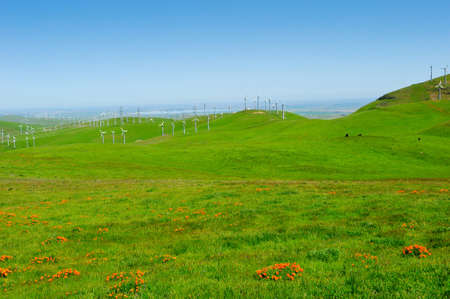 Field of windmills with green grass and california poppys photo