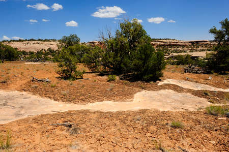 Biological soil crust is a living groundcover found in the desert southwest. Banco de Imagens