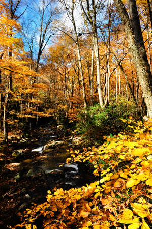 autumn colour: A beautiful fall day in New England with a slow moving stream