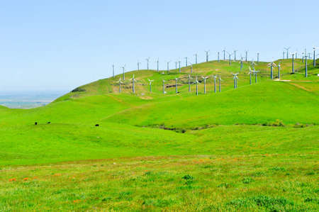 Wind mills on green rolling hills with cows and poppies photo