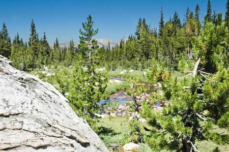 high sierra: A high sierra meadow with stream in Yosemite National Park