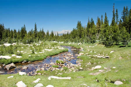 high sierra: A high sierra stream meandering thru a meadow in Yosemite National Park