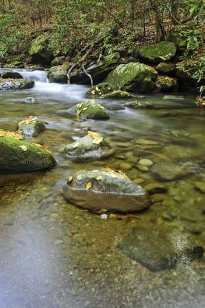 A slow moving creek with fall leaves Stock Photo - 8144253