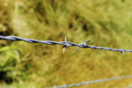 Two strands of barbwire fencing with a yellow fall background photo