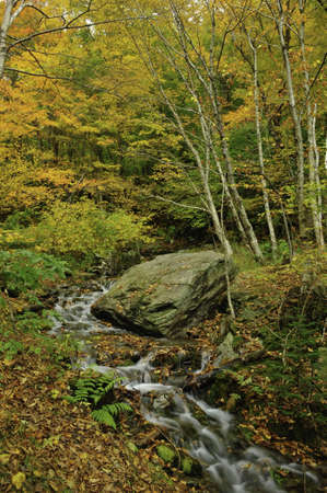 A small creek flowing thru the fall colors Stock Photo - 9349693