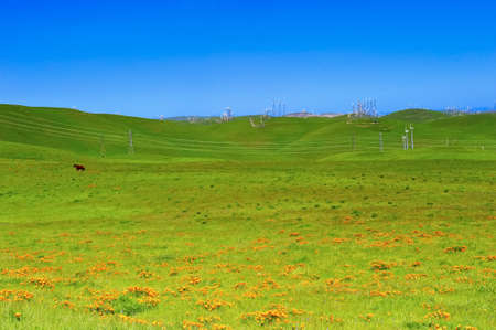 A field of orange california poppies with a horse and windmills in the background photo