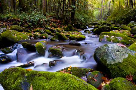 A slow moving stream in the Smoky Mountains in fall
