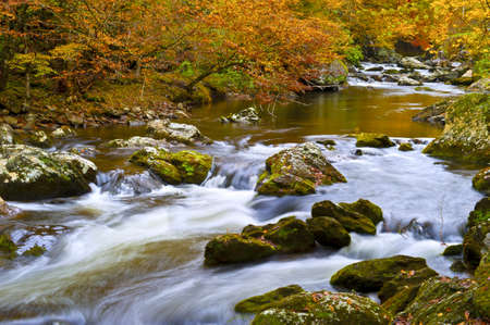 A slow moving creek in fall at Smoky Mountain National Park