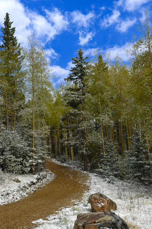 A dirt road with snow going through the forest  photo