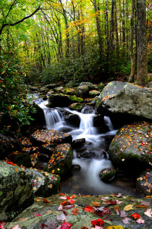 Creek flowing through the fall colors in Smoky Mountain National Park photo