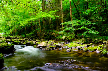 A slow moving stream in Smoky Mountain National Park in Summer photo