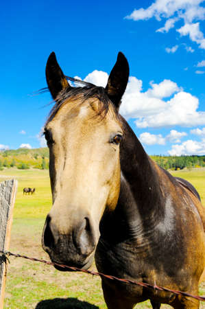 Portrait of a horse looking over a barbed wire fence photo