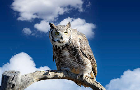 Great horned owl perched on a branch photo