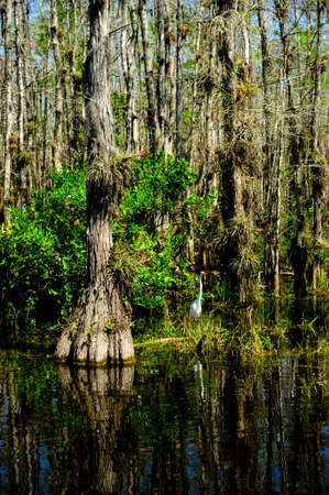 everglades national park: Swamp in the Florida Everglades National Park Stock Photo