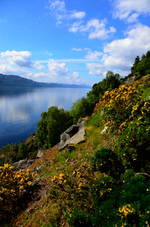 loch ness: Yellow Gorse blooming on a hillside next to Loch Ness, Scotland Stock Photo