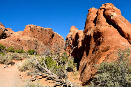 Pine tree arch trail in Arches National Park, near Moab Utah. 版權商用圖片