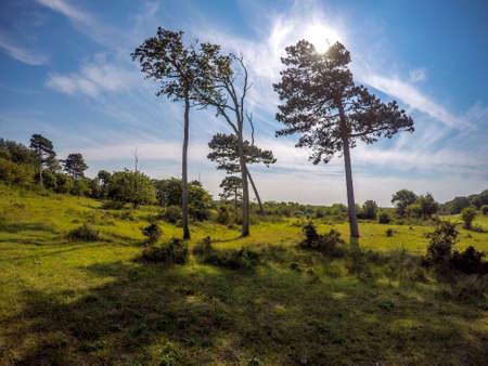 conifers: three conifers Stock Photo