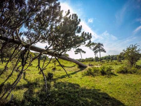 collapsed: Horizontal collapsed tree Stock Photo