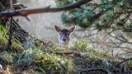 seek: Deer plays hide and seek