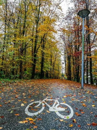 Cycle lane in the forest with fall colors