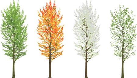 Árbol alto en cuatro estaciones verano otoño invierno primavera aislado Ilustración de vector
