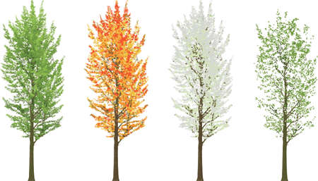 Albero alto in quattro stagioni estate autunno inverno primavera isolata Vettoriali