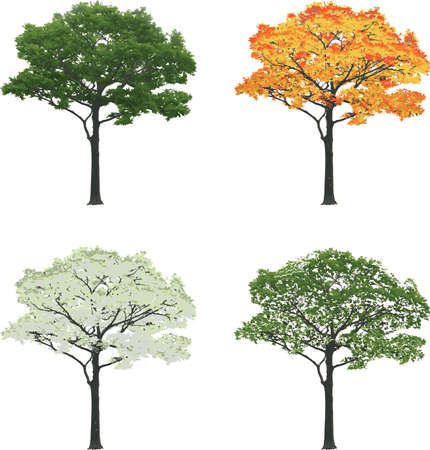 Tree in four seasons summer fall winter spring isolated on white background