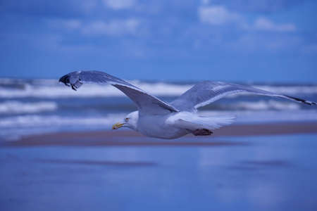 Seagull floating in the air on the beach