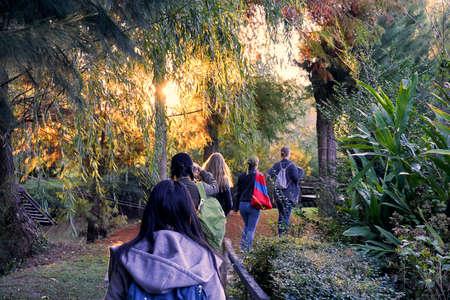 Gruppe junger Mädchen, die durch den Wald wandern