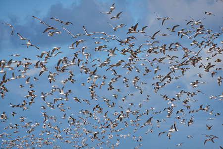 large Flock of seagulls with cloudy sky Stock Photo