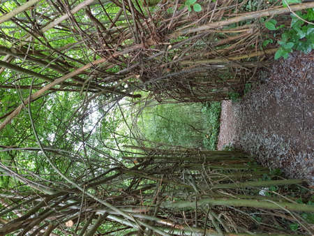 Corridor in forest created by braided twigs