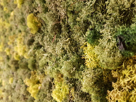 Background texture of differend shades or green moss vegetation