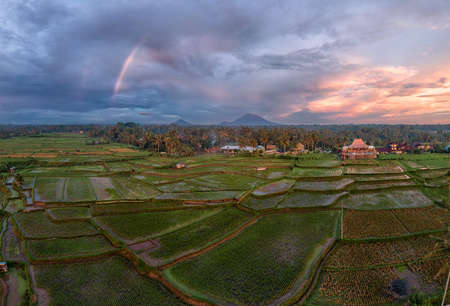 High resolution aerial image of rainy sunset sky with rainbow over green rice fields on Bali, Indonesia