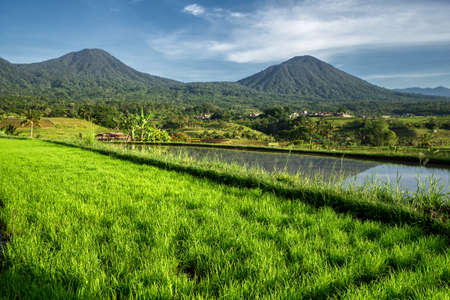 Sunny morning on the famous Jatiluwih rice terrace on central Bali, Indonesia 版權商用圖片