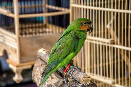 Green parrot sitting on wooden stick
