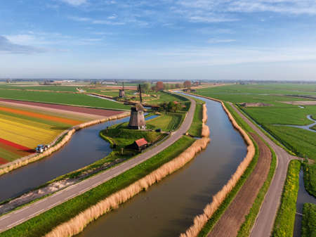Aerial view of Dutch agricultural spring scene with classic windmill, colored tulip field and water