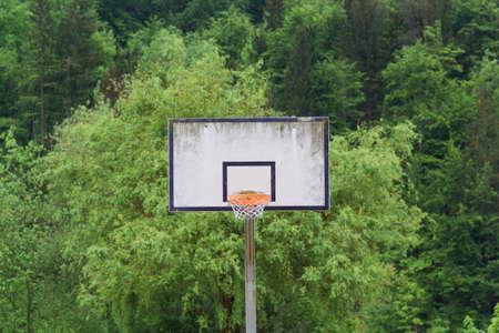 backboard: Old basketball backboard on a background of trees.