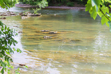 rock bottom: Shallow clear mountain river and layered rock bottom. Stock Photo