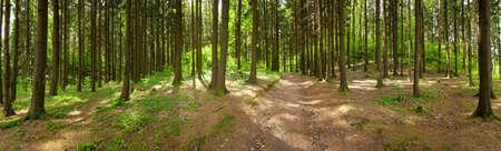 숲의 파노라마, 봄의 시간