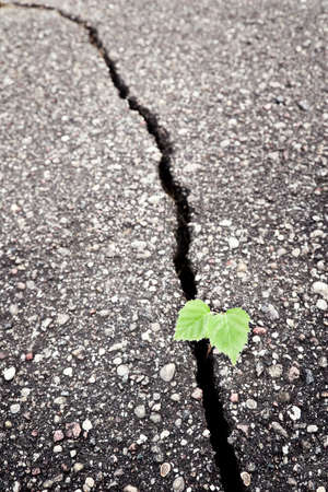 Green plant growing trough cracked ground  Stock Photo - 7718210