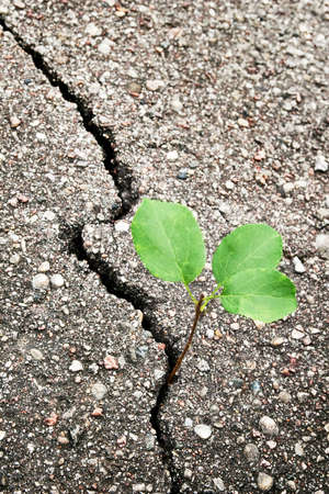 Green plant growing trough cracked ground  photo