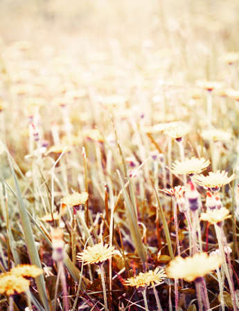Abstract wild flowers on field background photo