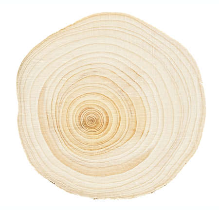 knotting: Wood stump rings texture, wooden background