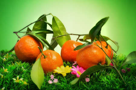 clementine with leaves over natural background Stock Photo - 16719060