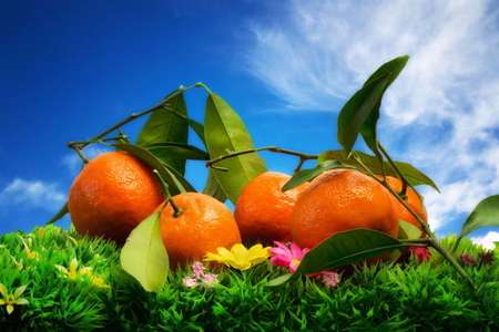 clementine with leaves over natural background Stock Photo - 16719039