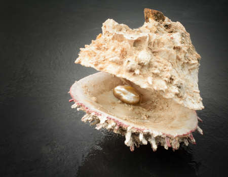 oyster with precious pearl over wet ardesia photo