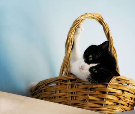 cat with green eyes in a basket photo