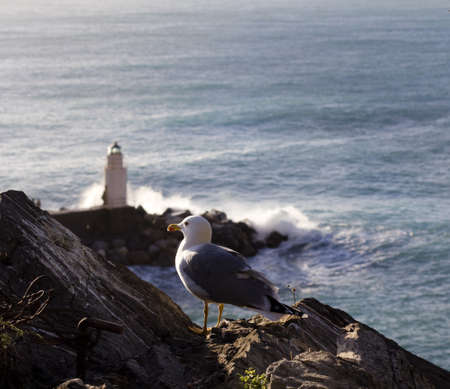 seagull and lighthouse photo