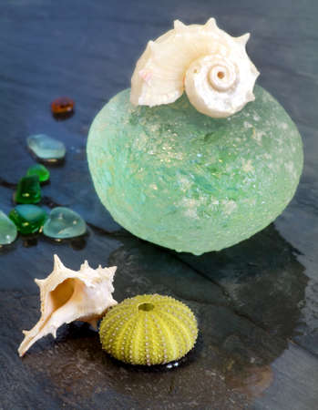 summer conceptt with seashells over wet ardesia photo